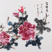 赵敏四尺斗方国画牡丹《富贵图》